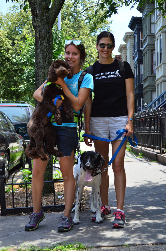 Hair of the Dog Walkers Brooklyn's Best Ways to Pamper Your Pets