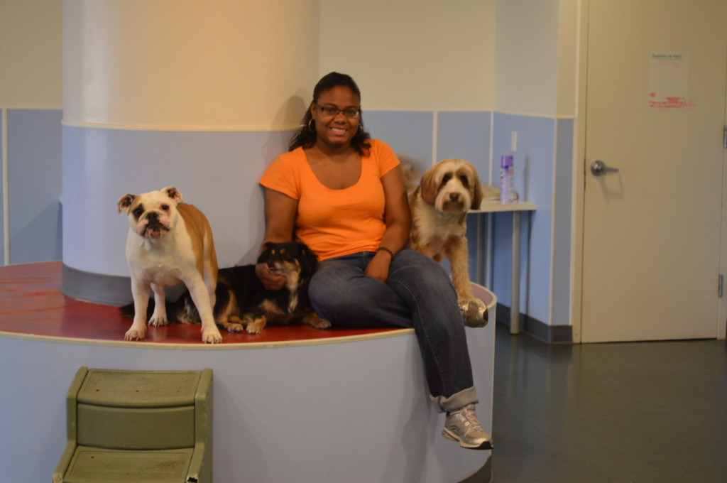 Wag Club NY Brooklyn's Best Ways to Pamper Your Pets