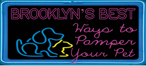 Brooklyn's Best Ways to Pamper Your Pets