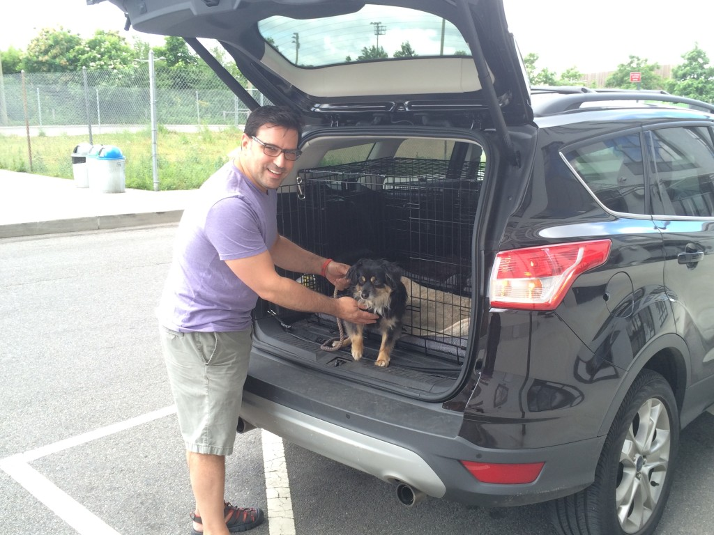 Little Dipper Pet Taxi Brooklyn's Best Ways to Pamper Your Pets