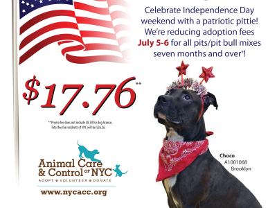 "East New York: ""Patriotic Pit Bulls"" Adoption Special"